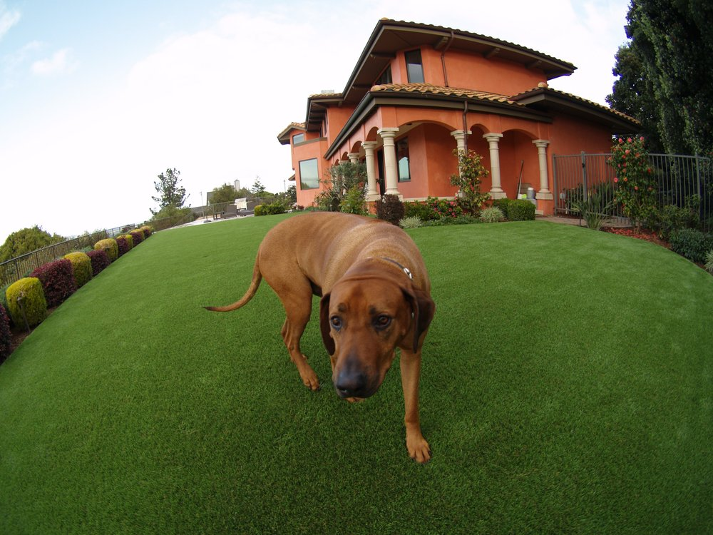 artificial grass for pets. Artificial Grass For A Dog Running Area Installed In Large Backyard Pets