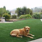 A Comfortable Synthetic Grass Playground For Your Beloved Dog