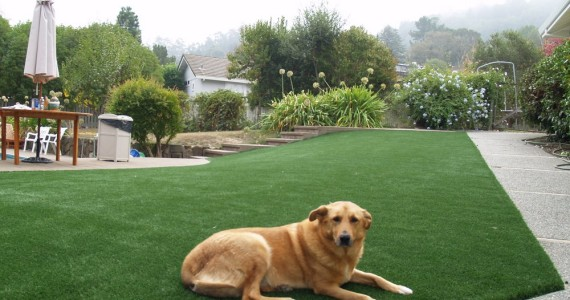 Artificial grass for a dog running area