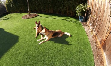 Artificial Grass Dog Run Installation