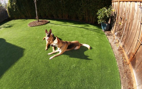 Artificial grass installed for a dog run area in a backyard
