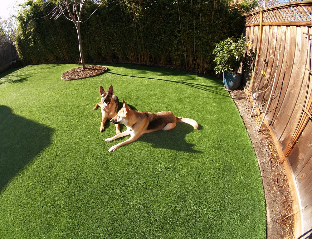 ... Artificial Grass Installed For A Dog Run Area In A Backyard