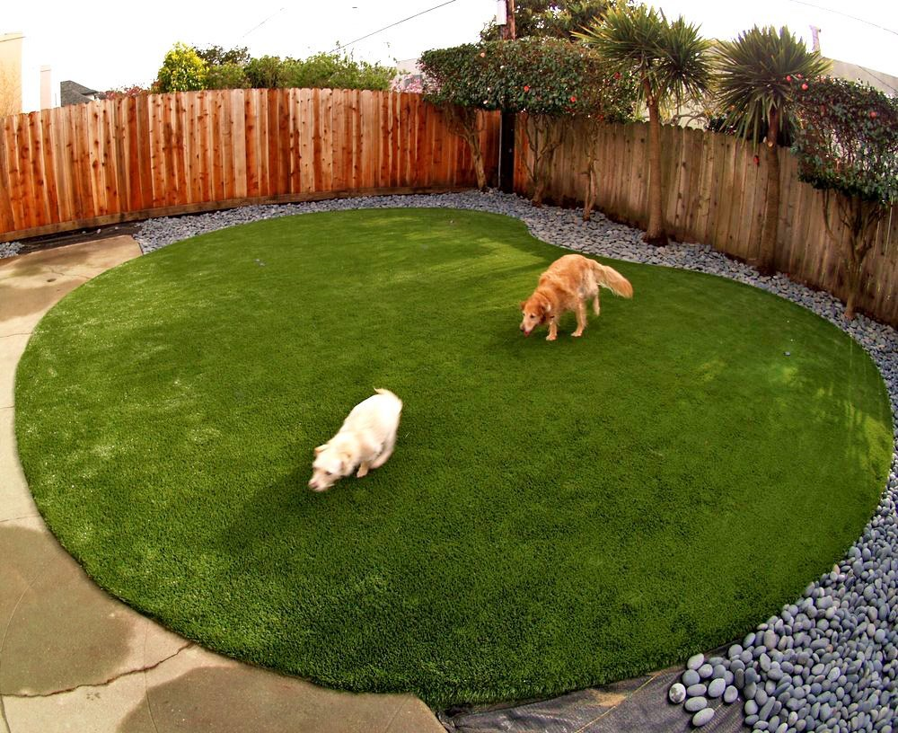 Artificial Turf For A Dog Run Area Installed In Kidney Shape