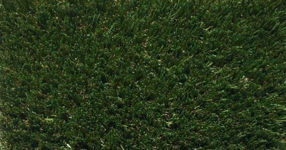PP-80 Fescue Blend With Dead Ends