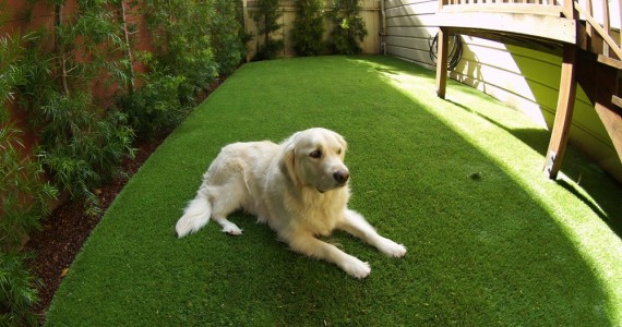 Artificial grass installed for a dog run area