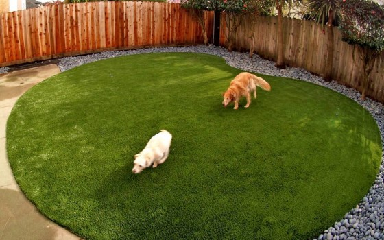 Artificial turf for a dog run area installed in a kidney shape