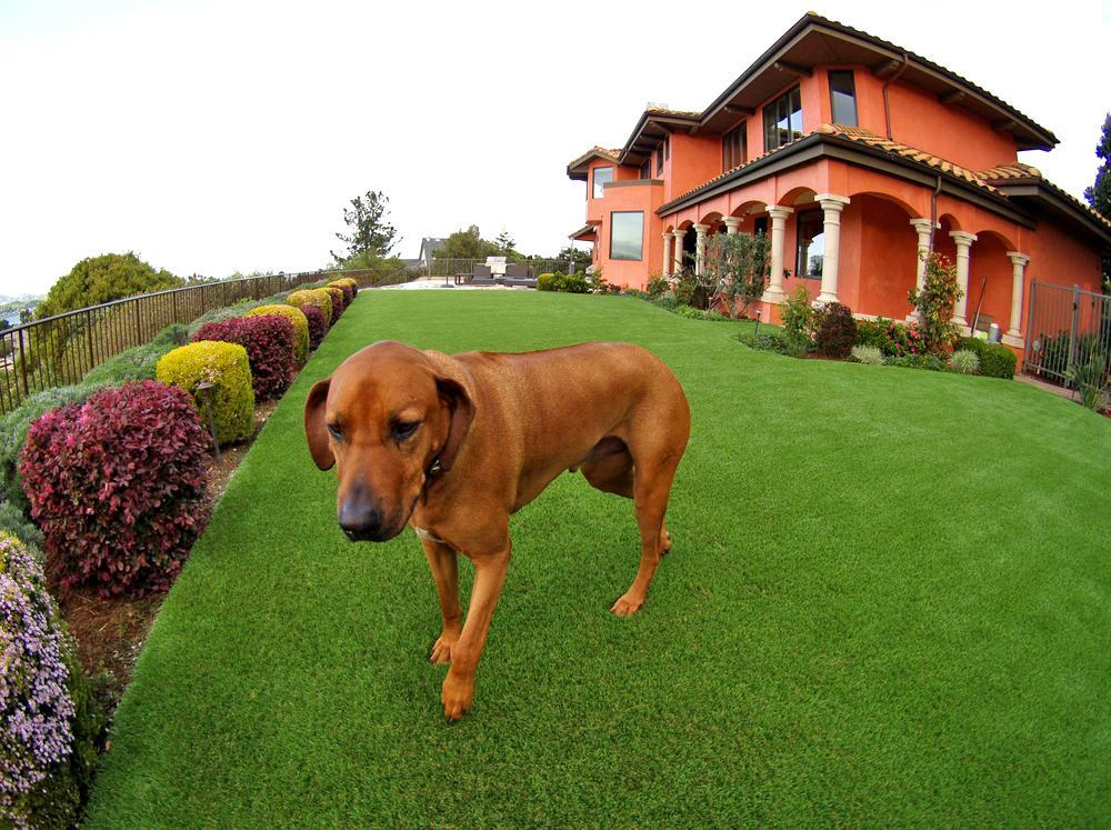 Artificial Or Synthetic Grass For Dog Run Areas