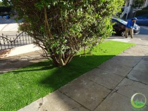 Front lawns - After