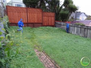 Back lawns - Before