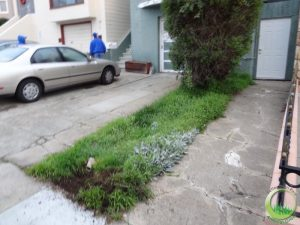 Front lawns - Before