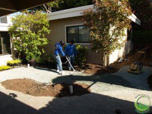 Artificial turf & sod in a backyard in Bay Area (before)