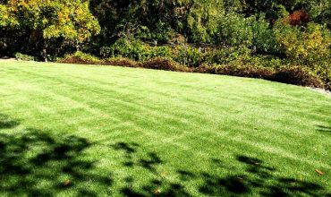 Artificial Grass Is Gaining Popularity
