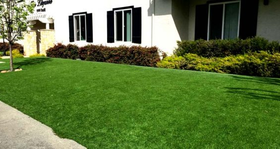 Turf for commercial landscaping