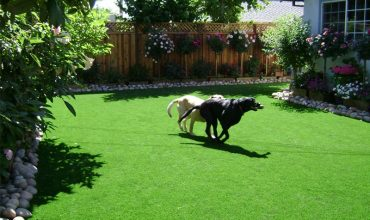 How to keep clean dog run areas?
