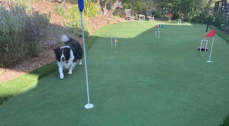 5 reasons why dog owners should install artificial grass