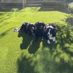 Artificial Grass for pets at home: backyard, garden, and open spaces