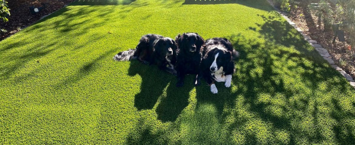 Artificial Grass for Pets: Your FAQs Answered