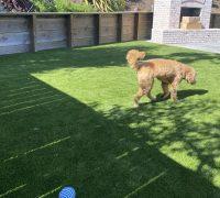 best-artificial-grass-for-residential-4