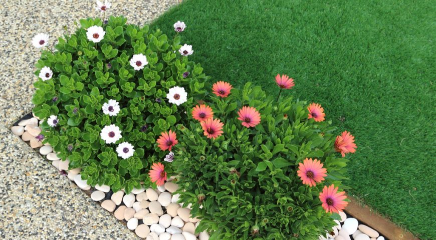 Garden Remodeling with Artificial Grass: Choose the Best Option