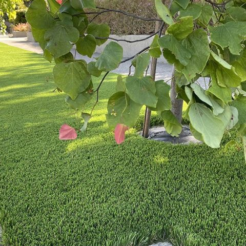 Artificial Grass Installation in public areas